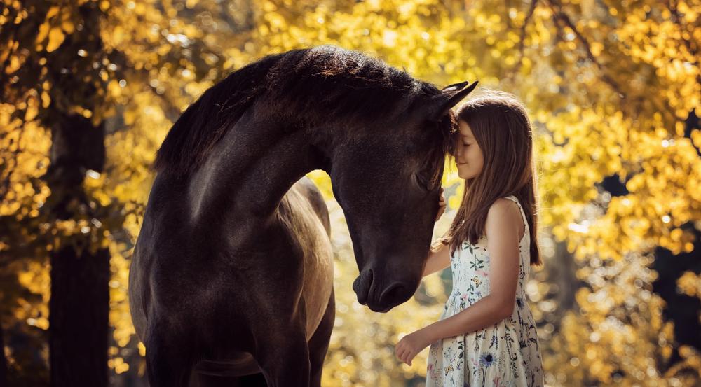 pferd-bemer